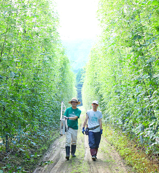 Home of Japanese beer, Tono beer tourism