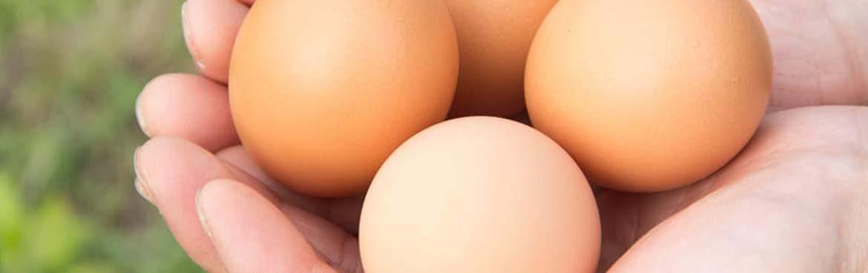 やますけ農園の卵
